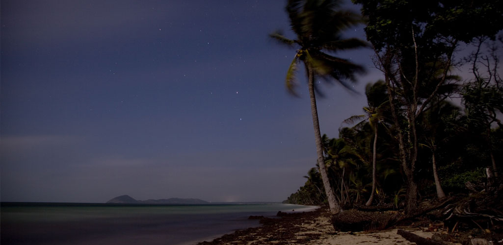 Moonlit Beach with Palm Trees